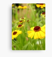 All yellow Canvas Print