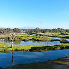 Werribee River by Sharon Brown