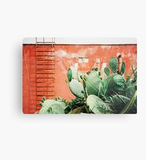 Closeup on Cacti Growing in Front of Shabby Red Wall Shot on Porta 400 Metal Print