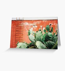 Closeup on Cacti Growing in Front of Shabby Red Wall Shot on Porta 400 Greeting Card