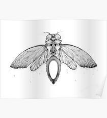 Cicada Bug Wing Illustration Poster