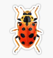 Orange Beetle Sticker