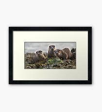 Scottish Otter family Framed Print