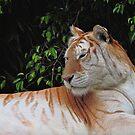 White Tiger by odarkeone