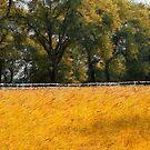 Golden Meadows by Brian Gaynor