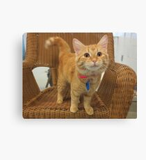 Red Tabby Kitten Canvas Print