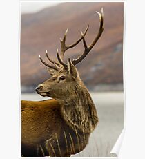 Autumnal Stag Poster