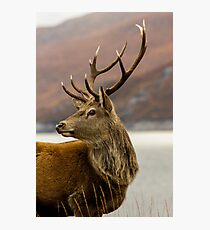 Autumnal Stag Photographic Print