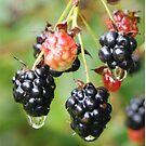 Juicy Sweet by Ann Allerup