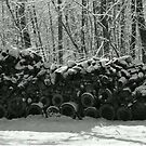 Snow Covered Wood by Ann Allerup