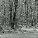 Winter Stillness by Ann Allerup