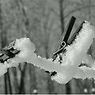 Winter Wash by Ann Allerup