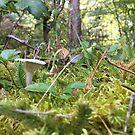 Forest Fantasy  by Ann Allerup