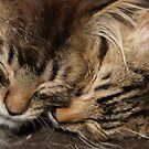 Sweet Dreams by Ann Allerup