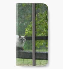 Cat on a Fence Post iPhone Wallet/Case/Skin