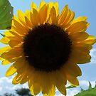 Summer Goddess, Bold and Beautiful by Ann Allerup