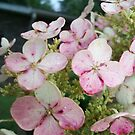Hydrangeas in the Rain by Ann Allerup