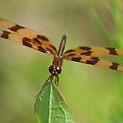 Halloween Pennant by William Brennan