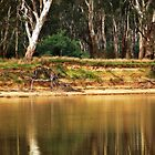 Murray River Richness by Lozzar Landscape
