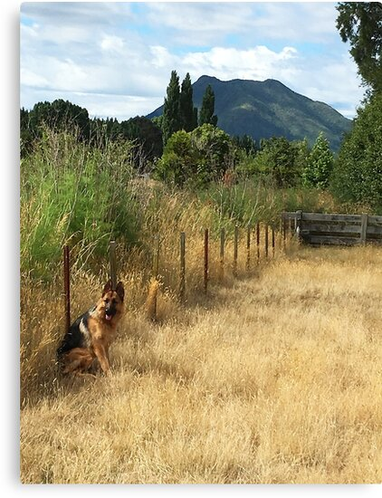 Summer at Mt Putauaki New Zealand by cdwork