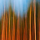 forest fire by Hannele Luhtasela-el Showk