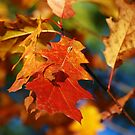 Close-up of Fall-Coloured Oak Leaves by Erick Sodhi