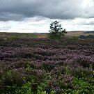 Heather Landscape by Richard Winskill