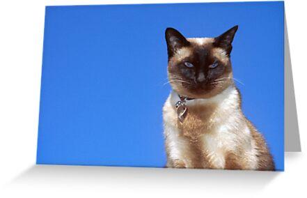 My Blue Eyed Boy by Tiffany Dryburgh