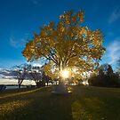 Autumn Light by IanMcGregor