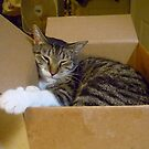 Taffy and the New Box by Vivian Eagleson