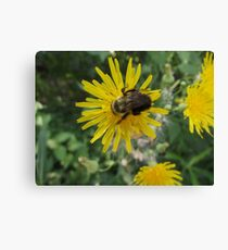 Bee on Flower Macro Canvas Print