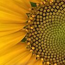 Sunflower close-up by botanicalsbyV