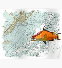 Hogfish on a Chart Poster
