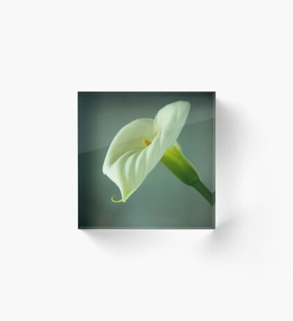 Arum Lily - From the Heart Acrylic Block