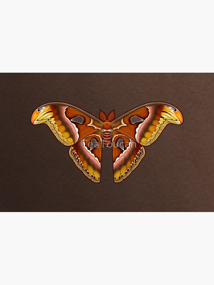 Atlas Moth by TeaToucan