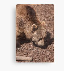 bear in the zoo Canvas Print