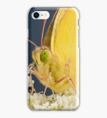 Yellow Sulfur Butterfly on Queen's Lace iPhone Case/Skin