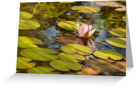 Floating Lilly by Dan Dexter