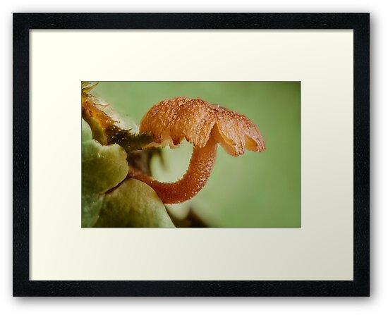 Miniature Mushroom by Dan Dexter