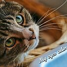Eyes Adore by MDossat
