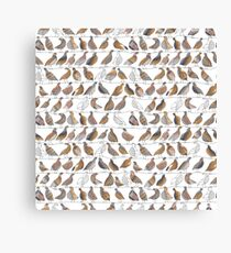 Doves on Wires Watercolor Pattern Canvas Print