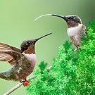 Hummingbird Conversation by Bonnie T.  Barry