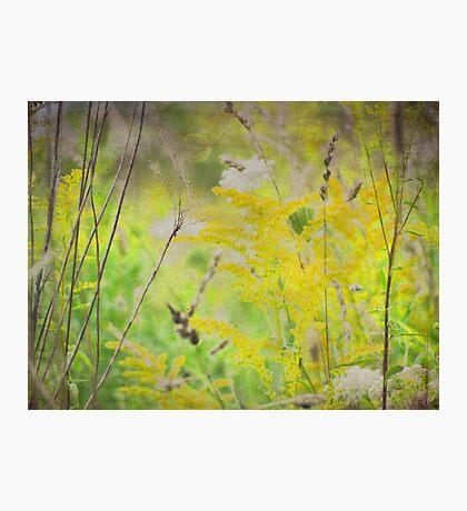 wild grasses 16 Photographic Print