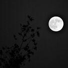 Moonrise by Stephen Burke