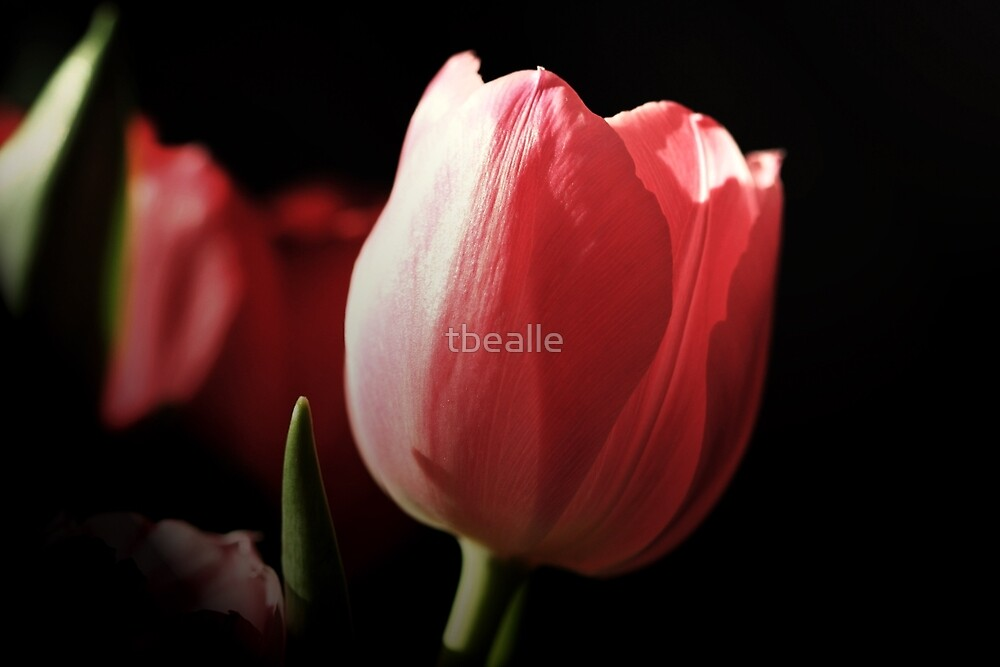 Tribute to PINK by Terri~Lynn Bealle