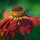 Autumn Colours by Kasia-D