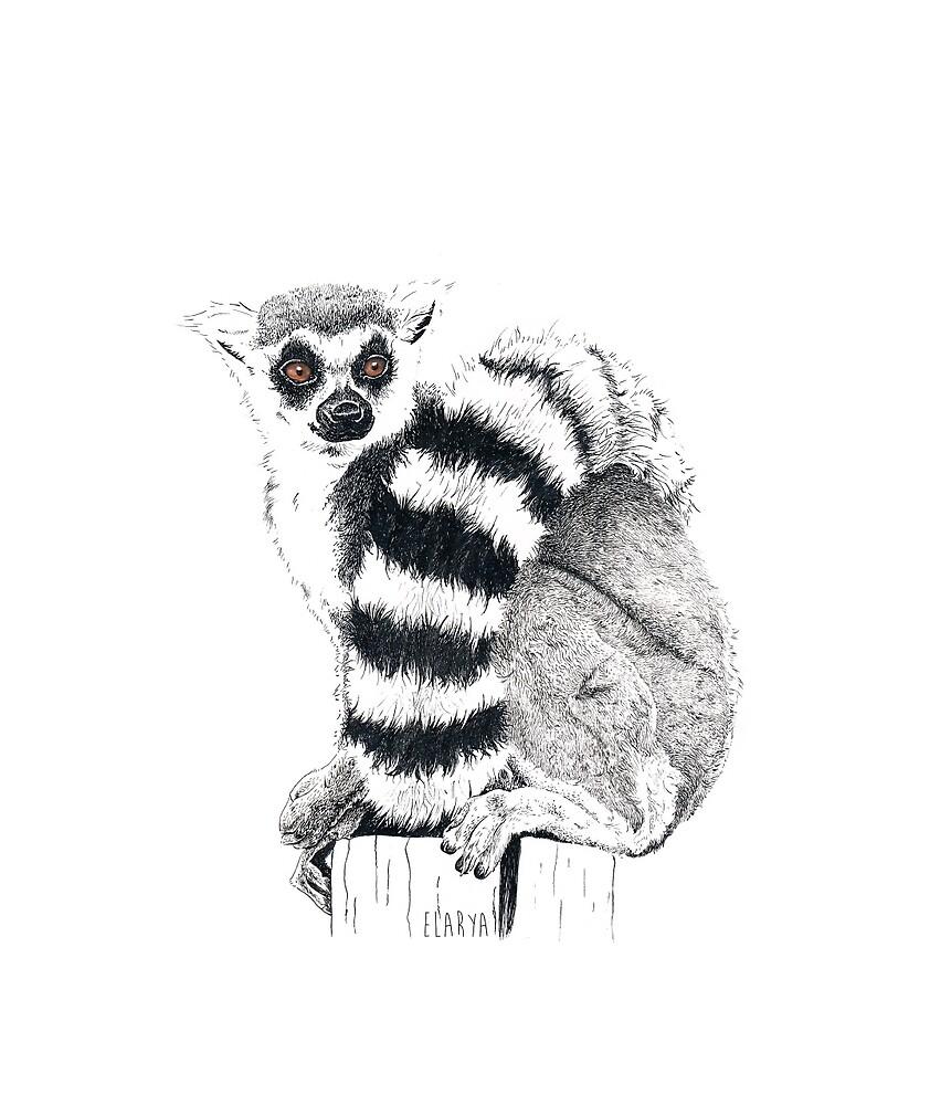 A lemur by elarya