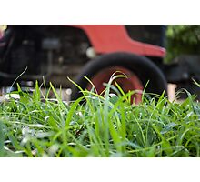 Big grass cutter Photographic Print