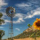 Country Sunshine by Michael Matthews