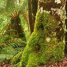 Tassie Rainforest by Michael Matthews
